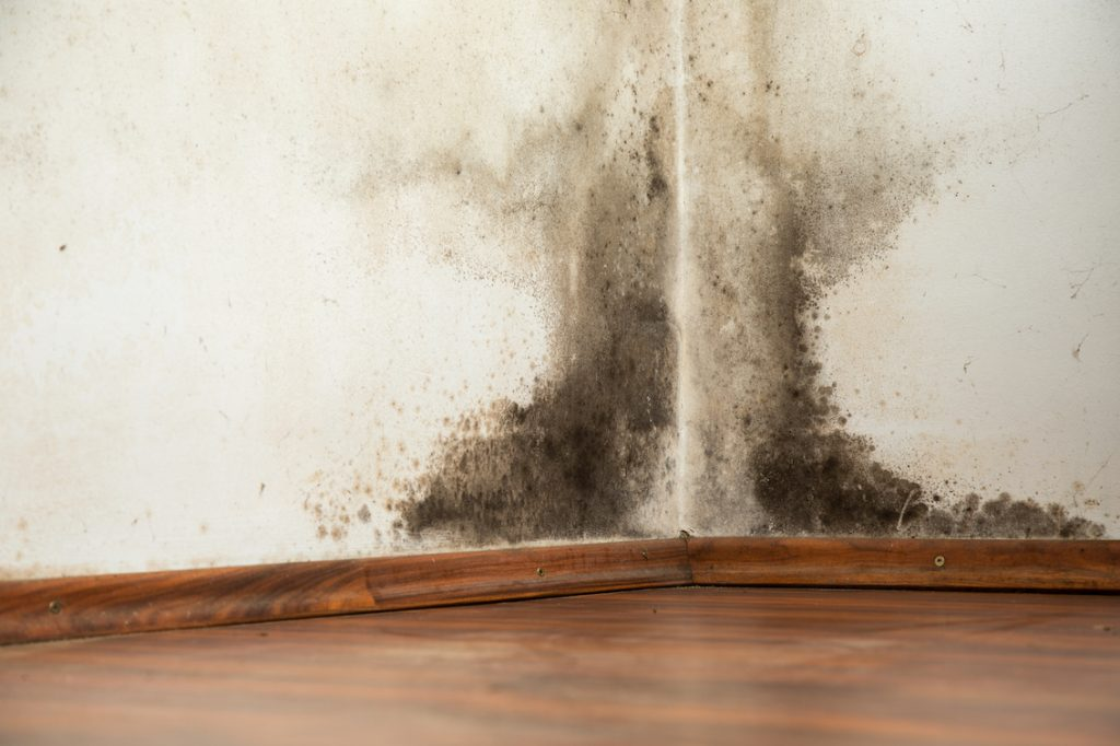 Most mould is preventable