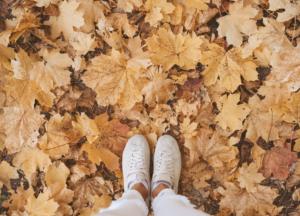 Autumn property maintenance