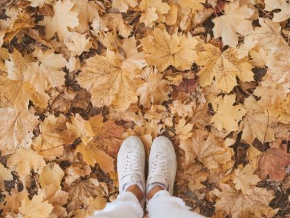 Essential Autumn Property Maintenance Tips